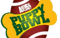 The Puppy Bowl was better than the Super Bowl