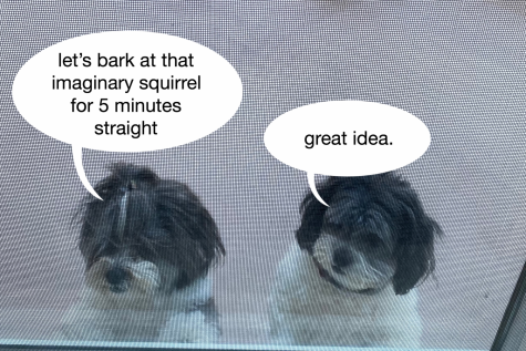 While in quarantine, I have noticed that my dogs bark so much more now than before. Perhaps they have always barked this much, but I was only a witness to it for a fraction of the day.